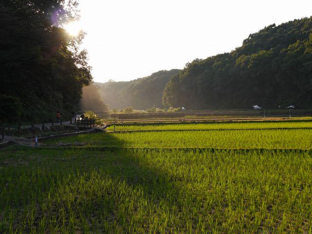 田んぼ道&子星の山のバス停は横浜市青葉区の『寺家ふるさと村』